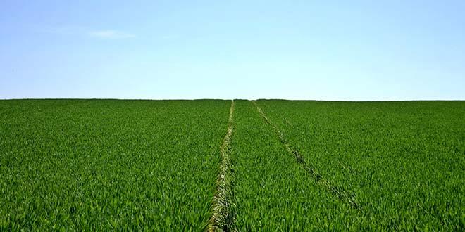 Zakat in der Landwirtschaft