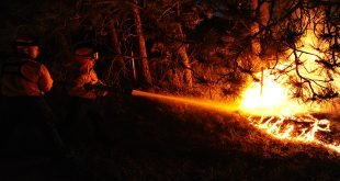 Waldbrand Israel